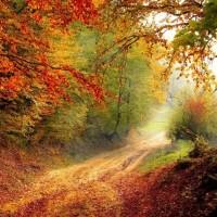 Осень золотая….  / № 347